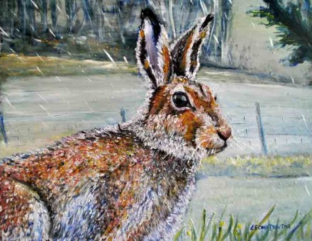 'O Mulconry Irish Hare